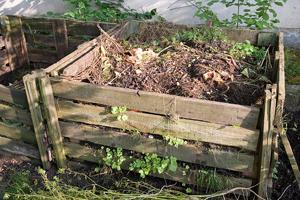 bigstock-bio-compost-703620